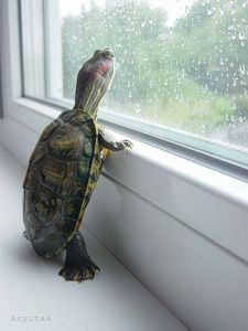 turtle-window