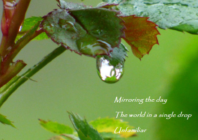 Mirroring the day The world in a single drop Unfamiliar